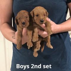 Ariel Boys 2nd set pic 3 7-2