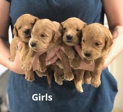 Ariel Girls pic 3 7-2