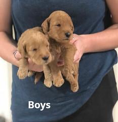 Carly Boys pic 2 7-2