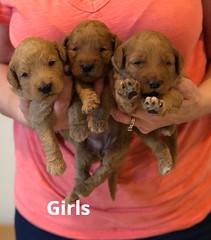 Bailey Girls pic 4 7-2
