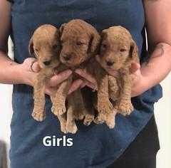 Carly Girls 7-2