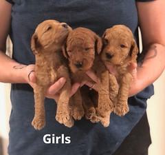 Carly Girls pic 4 7-2