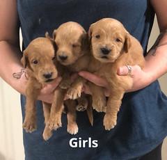 Gracie Girls 7-2