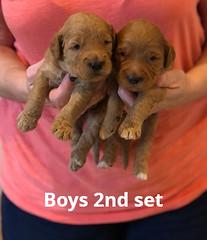 Bailey Boys 2nd set pic 3 7-2
