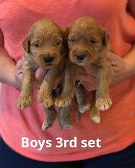 Bailey Boys 3rd set pic 2 7-2