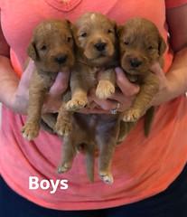 Bailey Boys pic 2 7-2