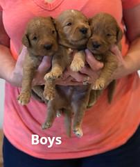 Bailey Boys pic 3 7-2