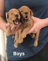 Carly Boys pic 3 7-2