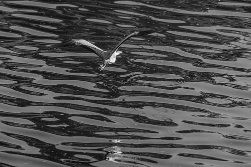 vol au raz de l'eau