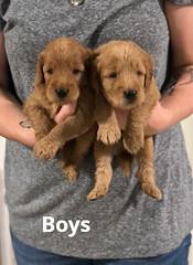Carly Boys pic 2 7-9