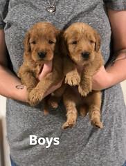 Carly Boys pic 3 7-9
