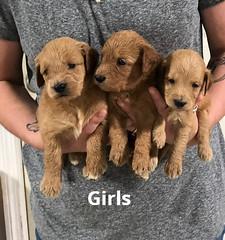 Gracie Girls pic 2 7-9
