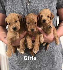 Gracie Girls pic 3 7-9