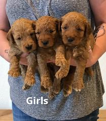 Bailey Girls 7-9