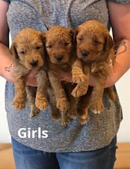 Bailey Girls pic 3 7-9