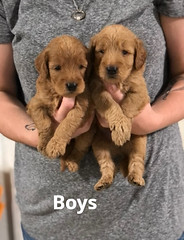 Carly Boys pic 4 7-9