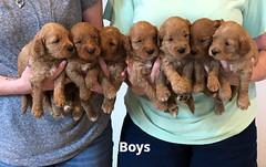 Bailey Boys 7-9