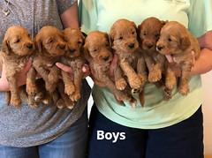 Bailey Boys pic 2 7-9
