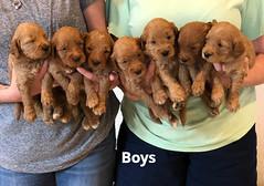 Bailey Boys pic 4 7-9