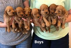 Bailey Boys pic 3 7-9