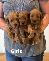 Bailey Girls pic 2 7-9