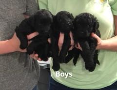 Ella Boys 7-9