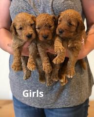 Bailey Girls pic 4 7-9