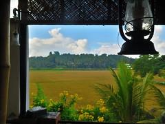 India Tuk-Tuk Adventure - Large Minority