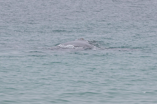 Christie The Whale & Calf At Second Valley-10