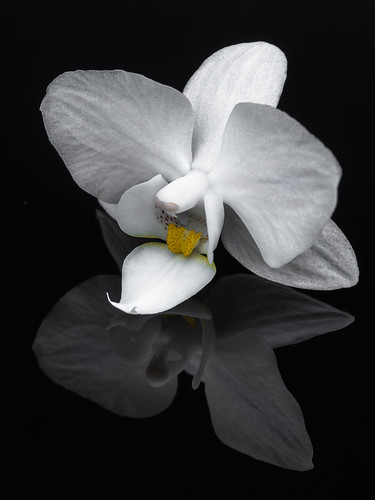 """""""O"""" from Orchid - HMM"""