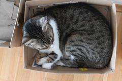 Millie in eine Karton