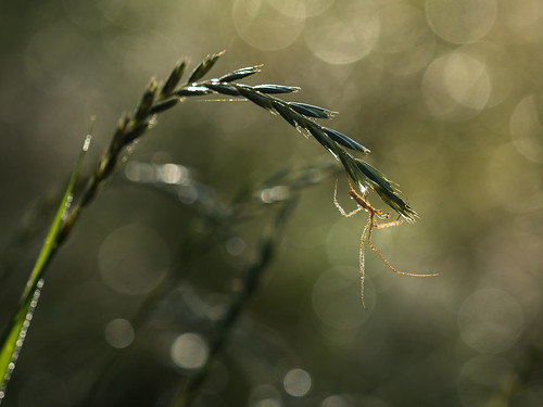 small slender spider in her environment