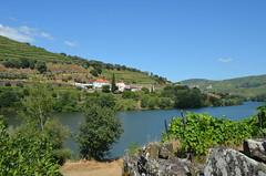 Percurso do Vinho do Porto XLV