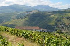Percurso do Vinho do Porto LV