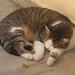 Parga - sleepy cat