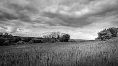 Paysage en noir et blanc