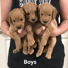 Ariel Boys 7-16