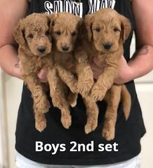Gracie Boys 2nd set pic 2 7-16