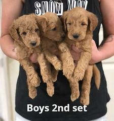 Gracie Boys 2nd set pic 4 7-16