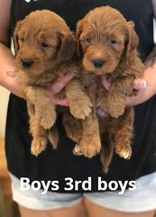Bailey Boys 3rd set pic 2 7-16