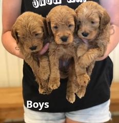 Bailey Boys 7-16