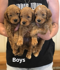 Bailey Boys pic 2 7-16