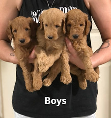 Gracie Boys pic 4 7-16