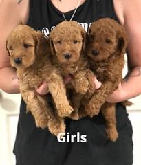 Carly Girls pic 2 7-16