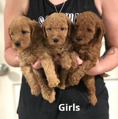 Carly Girls pic 3 7-16