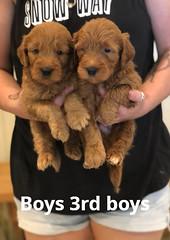 Bailey Boys 3rd set pic 4 7-16