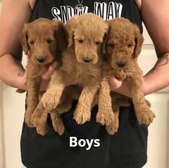 Gracie Boys 7-16