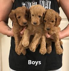 Gracie Boys pic 2 7-16