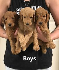 Gracie Boys pic 3 7-16