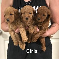 Carly Girls pic 4 7-16